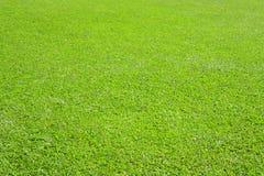grönskande grässlätt Royaltyfri Fotografi