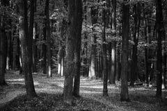 Grönskande skog i svartvitt arkivbilder