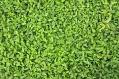 grönskande växt i trädgård Royaltyfri Foto