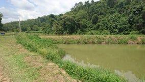 Grönskaplats med det naturliga dammet royaltyfri bild