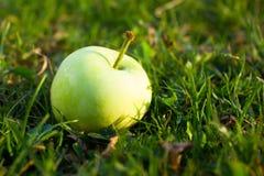 Grönt äpple i gräs Arkivbilder