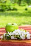 Grönt äpple med en filial av ett blomstra Apple-träd Arkivbilder