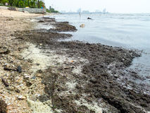 grönt anmärkningsföroreningvatten Arkivfoto