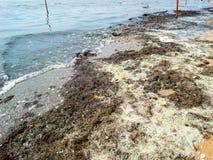 grönt anmärkningsföroreningvatten Arkivbild