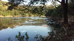 grönt anmärkningsföroreningvatten royaltyfri foto