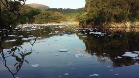 grönt anmärkningsföroreningvatten arkivbilder