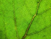 grönt ark Arkivfoton