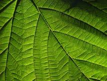 grönt ark Arkivbild