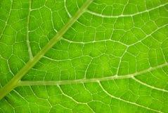 grönt ark för bakgrund Arkivfoto