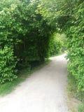 grönt avstånd Fotografering för Bildbyråer