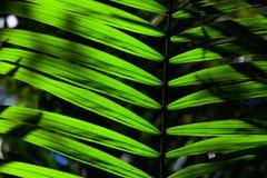 Grönt backlit blad i djungeln Arkivbild