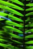 Grönt backlit blad i djungeln Arkivbilder