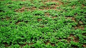 grönt barn för gräs Arkivfoto