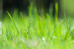 grönt barn för gräs Royaltyfri Foto
