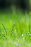 grönt barn för gräs Fotografering för Bildbyråer