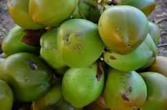 grönt barn för kokosnöt Royaltyfri Foto