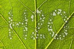 Grönt begrepp för bladregndroppevatten Royaltyfri Fotografi