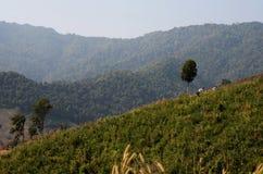 Grönt berg Royaltyfri Bild