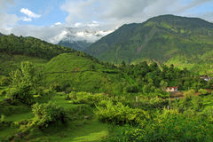 grönt berg för himalayasindia kangra Arkivbilder