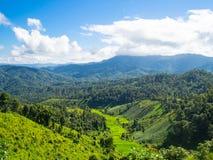 Grönt berg med blå himmel Arkivbild