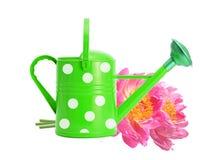 Grönt bevattna kan och rosa pionblommor som isoleras på vit Royaltyfria Bilder