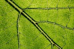 Grönt blad Arkivfoto