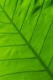 Grönt blad royaltyfri fotografi