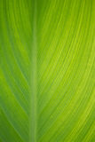 Grönt blad Royaltyfria Foton