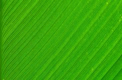 Grönt blad av trädet Royaltyfria Bilder