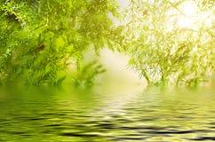 Grönt blad, bokeheffekten, morgonsolljus och vattenreflexion Arkivfoto