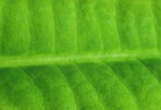 Grönt blad, del av det gröna arket Royaltyfri Foto
