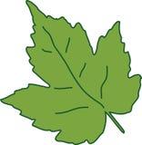 Grönt blad, en naturskapelse Royaltyfria Bilder