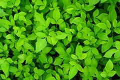 grönt blad för abstrakt bakgrund Fotografering för Bildbyråer