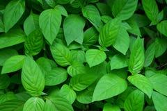 Grönt blad för abstrakt begrepp Royaltyfri Fotografi
