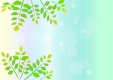 Grönt blad för bakgrundsmall Royaltyfria Bilder
