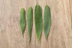 Gr?nt blad f?r bambou fyra p? tr?tabellen royaltyfria foton