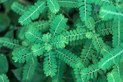 Grönt blad för Closeup för bakgrundsnatur Arkivbilder