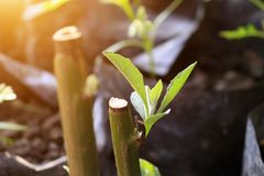 Grönt blad för Closeup som är vått i regnig dag med solljus Fotografering för Bildbyråer
