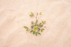 Grönt blad för träd på sandstranden Royaltyfri Foto