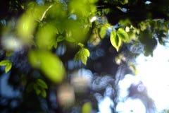 grönt blad i naturligt Arkivbild