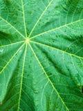 Grönt blad i regndroppar Arkivbild