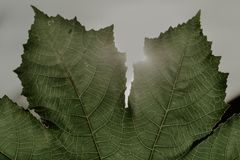 Grönt blad i solen royaltyfria bilder