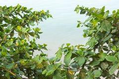 Grönt blad med blå havsbakgrund Royaltyfria Foton