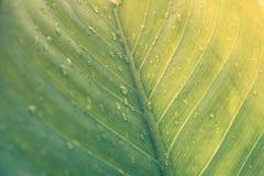 Grönt blad med droppar av vatten - abstrakt gräsplan gjorde randig natur b Royaltyfria Foton