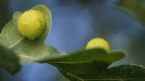 Grönt blad med gröna prickar fotografering för bildbyråer