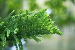 Grönt blad med regndroppar Fotografering för Bildbyråer