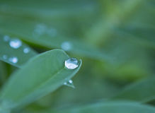 Grönt blad med regnsmå droppar Royaltyfri Fotografi