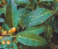 Grönt blad med små droppar av regn arkivfoto