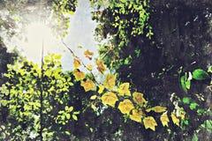 grönt blad med solsken Digital Art Impasto Oil Painting Abstr arkivbilder