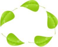 Grönt blad med utrymme för text vektor EPS10 Arkivfoton